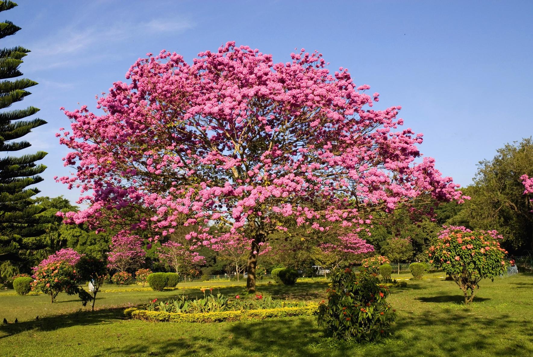 4 Nts Bangalore Mysore Ooty