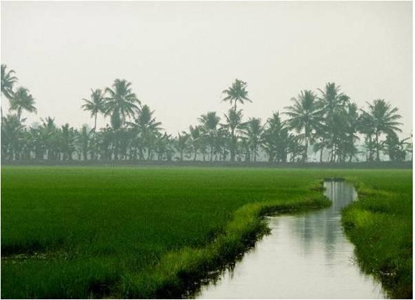 6Nts Munnar Thekkady Alleppey Kovalam
