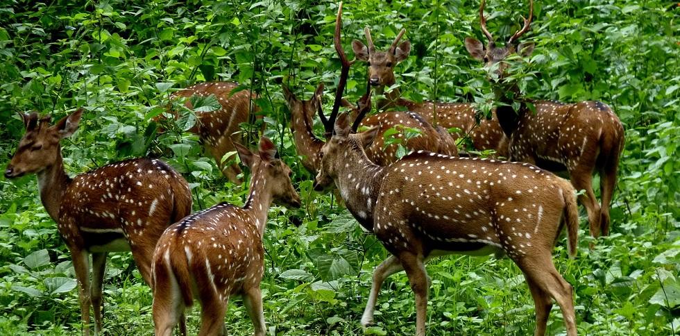 7Nts Kumarakom Alleppey Periyar Kodaikkanal  Munnar