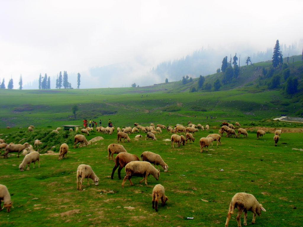 4Nts Srinagar Gulmarg Pahalgam